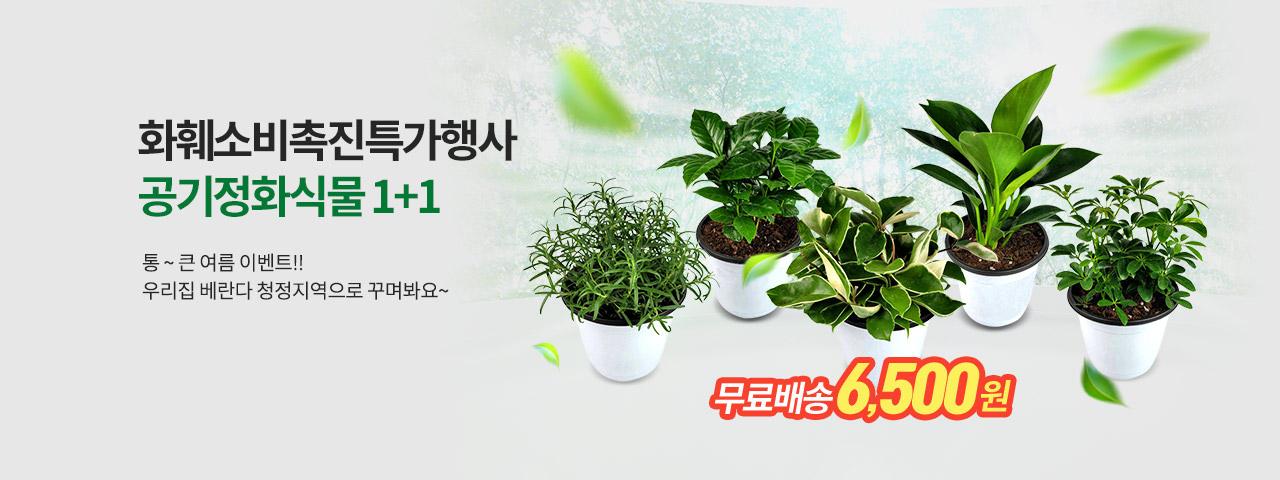 공기정화식물1+1