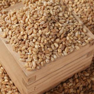 디자인농부 통밀쌀 1kg