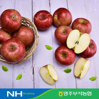 [경북농협] 영주부석 사과 5kg, 10kg #부사