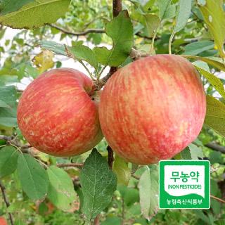 [친환경먹거리] 무농약 사과 2kg
