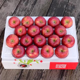 [영주풍기사과농장]햇 사과 4kg 17-19과 중소과 산지출고