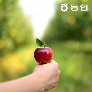 [할인행사] [경북능금농협] 껍질째 먹는 루비에스 세척 미니사과 400g x 4팩 총 1.6kg 산지 출고