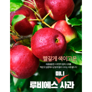 경산 용성농협 루비에스 사과 2kg(14브릭스 이상)