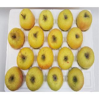 농협 청송 시나노골드(못난이,흠과 황금사과),10kg(32내)/중대과
