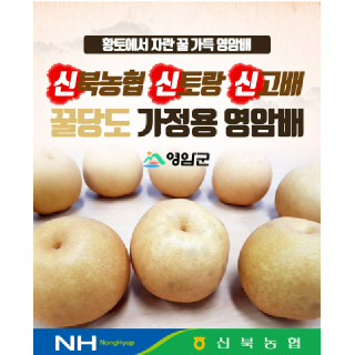 [신북농협] 신고배 가정용 5kg(옵션선택)