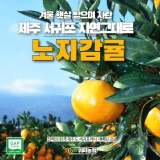 위미농협 문주왕 제주 노지감귤 5kg(소과)