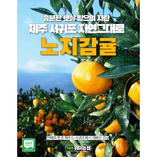 위미농협 문주왕 제주 감귤 5kg(로얄과)