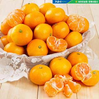 서귀포농협 청정오름 하우스감귤 5kg(40~47과)