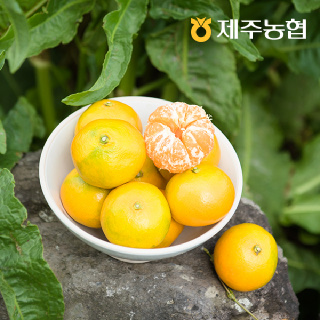 [제주농협] 귤로장생 제주 하우스감귤2.5kg 로얄과