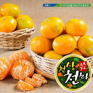 서귀포농협 천상천하 하우스감귤 3kg(28~32과)