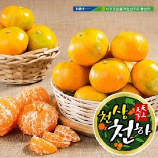 서귀포농협 천상천하 하우스감귤 3kg(35~45과)