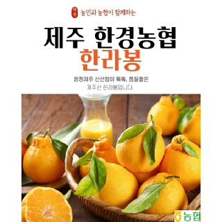 [제주한경농협] 제주 한라봉 3kg(선물용 9~12과)