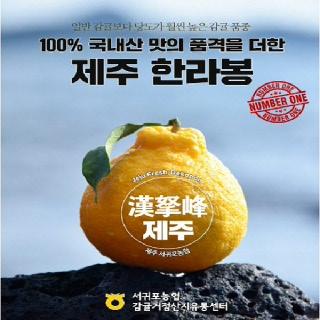 서귀포농협 한라봉 4.5kg(가정용/15내)