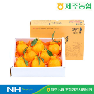 [제주농협] 귤로장생 한라봉2kg 대과(5-7입)