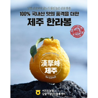 서귀포농협 한라봉 4.5kg(가정용/25내)