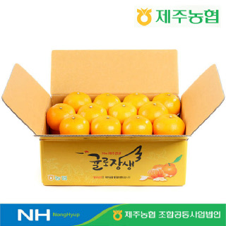 [20%즉시할인] 제주농협 귤로장생 천혜향4.5kg 중과(30입내)