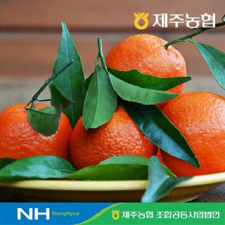 [제주농협] 귤로장생 레드향4.5kg 대과(20입내)