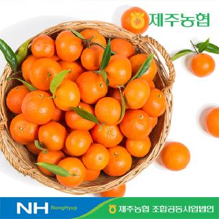 [제주농협] 귤로장생 레드향2kg 중과(9-12입내외)