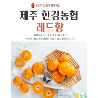 [제주 한경농협] 레드향3kg(선물용 8~12과)
