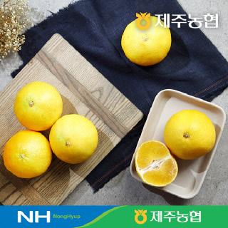 [제주농협] 황금향4.5kg(30입내외)