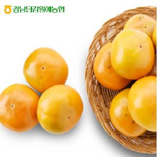경남단감원예농협 햇살아이 진영단감 5kg (대과/25내),L