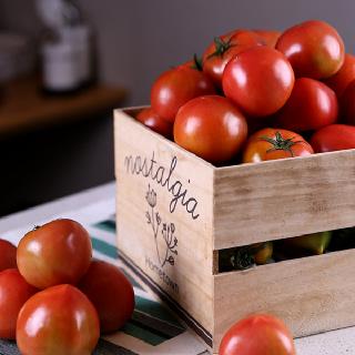 썬리치 탱글탱글한 완숙 토마토 2.5kg / 5kg (1~3번 랜덤과수) (중량선택)