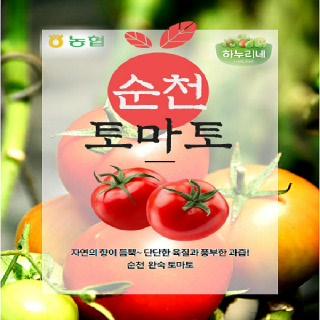 순천농협 완숙토마토 5kg