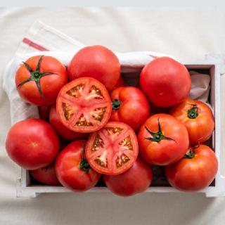 [남도장터]바른팜 완숙 찰 토마토 2kg 중과