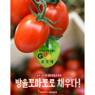 굿뜨래 대추방울토마토 2kg(1~3번과)