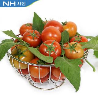 사천농협 GAP 토마토10kg(5~6번) 외 (3~4번/1~2번) 선택1