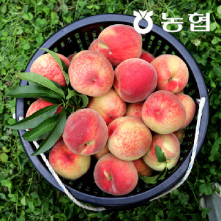 #경북 상주 털복숭아 백도 4.5kg 구성 # 딱딱한 복숭아