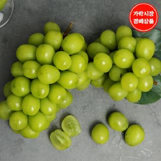 [가락시장][상주 에이플] 프리미엄 하우스 샤인머스켓 1송이(개당650~700g내외)_아이스박스