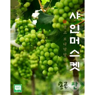 경산 용성농협 샤인머스켓 1.6kg(특품/당도선별, 2~3송이)