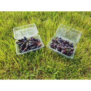 모서농협 국내산 키다리포도 1.6kg(800g*2팩)