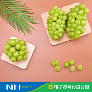 [연말특가!] [경북능금농협] 포도의 고장 # 영천 샤인머스켓 1.5kg, 2kg 구성 #특품