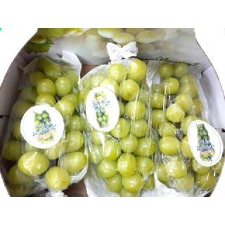 [신북농협] 샤인머스켓(망고향 청포도) 2kg(2-3수)