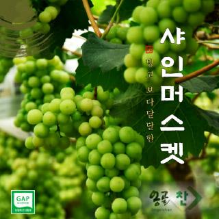 경산 용성농협 샤인머스켓 2kg, 1.5kg(가정용/당도선별)
