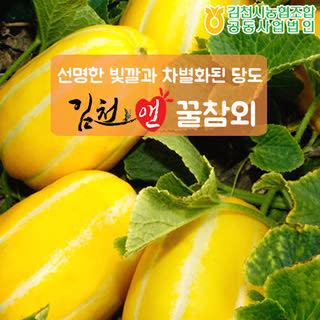김천농협 달콤아삭 꿀참외 3kg(가정용,실속형/6-10과)
