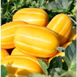 성주참외원예농협 성주참외 2kg(5~10과)