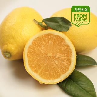 신선하고 상큼함이 가득한 제주도 레몬 2kg
