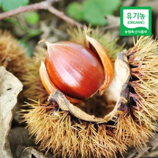 [산지직송] 충주 김의충님의 유기농 알밤(특) 2kg/4kg