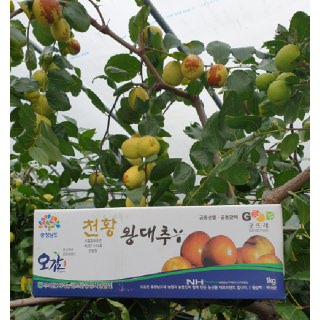 부여 굿뜨래 왕대추 1kg(500g*2팩)