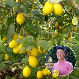 [생산자직송] 상큼한 제주 레몬 5kg