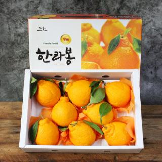 프리미엄 제주 한라봉 선물세트3kg(7-10과)