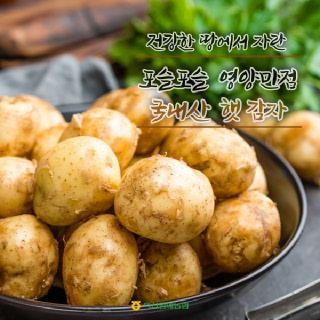 [익산원예농협] 2021년 수확! 포슬포슬 수미감자 3kg (대)