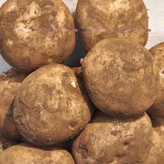 익산원예농협 감자 3kg(특/낱개중량90-130g)