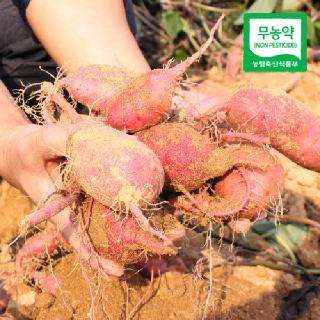 [산지직송] 해남 무농약 꿀고구마 (상특)3kg/5kg/10kg