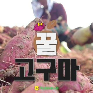 [익산원예농협] 2021년 전라도 햇 고구마(특상) 3kg,5kg,10kg