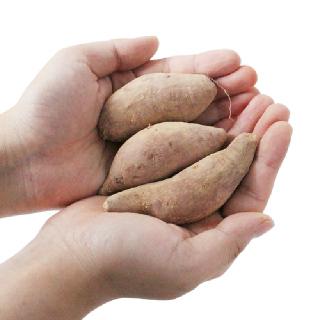 [산지직송] 해남 무농약 꿀고구마 (한입)3kg/5kg/10kg