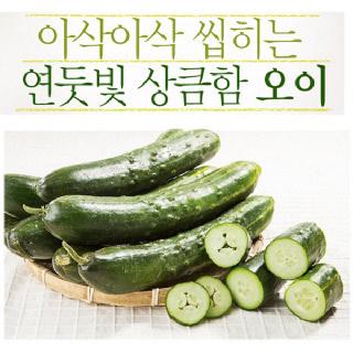 [익산원예농협] 취청오이 5kg(특) 21~25개